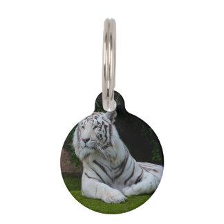 Tigre de Bengala blanco Placa Para Mascotas
