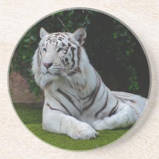 Tigre de Bengala blanco Posavasos Cerveza