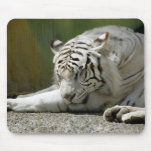 Tigre de Bengala blanco Tapete De Ratón