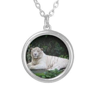Tigre de Bengala blanco y negro relajado y sonrisa Colgante Redondo