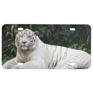 Tigre de Bengala blanco y negro relajado y sonrisa
