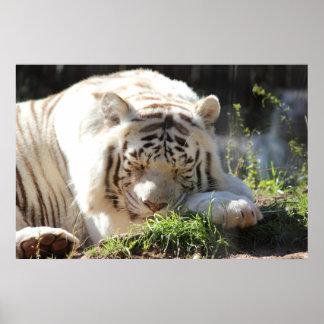 Tigre de Bengala del poster