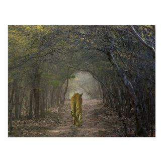 Tigre de Bengala en el bosque en Ranthambore Postales