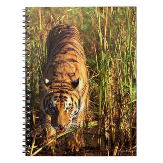 Tigre de Bengala en humedales Libreta