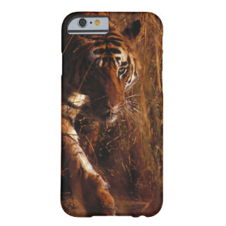 Tigre de Bengala Funda De iPhone 6 Barely There