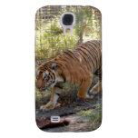 Tigre de Bengala i