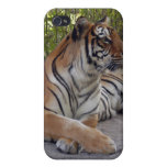 Tigre de Bengala i iPhone 4 Cobertura