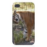 Tigre de Bengala i iPhone 4 Fundas