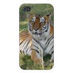 Tigre de Bengala i iPhone 4 Protectores