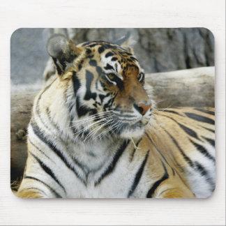 Tigre de Bengala Mousepad