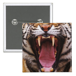 Tigre de Bengala, Panthera el Tigris 2 Pin Cuadrado