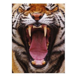 Tigre de Bengala, Panthera el Tigris 2 Tarjeta Postal