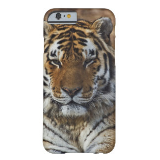 Tigre de Bengala, Panthera parque zoológico del Funda De iPhone 6 Barely There