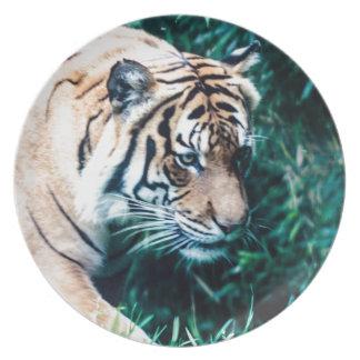 Tigre de Bengala Plato De Comida