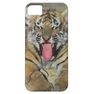 Tigre de Bengala que bosteza iPhone 5 Case-Mate Funda