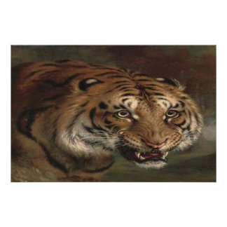 Tigre de Bengala que le mira poster