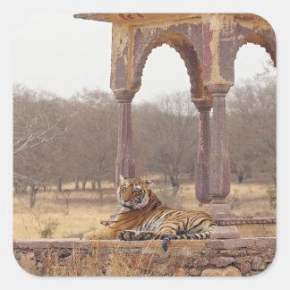 Tigre de Bengala real en el cenotafio, Ranthambhor Pegatina Cuadrada