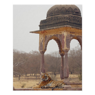 Tigre de Bengala real en el cenotafio, Ranthambhor Póster