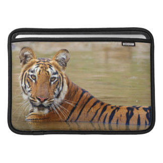 Tigre de Bengala real en el waterhole Fundas Macbook Air