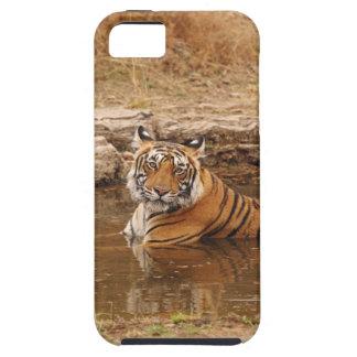 Tigre de Bengala real en la charca de la selva, 2 Funda Para iPhone 5 Tough