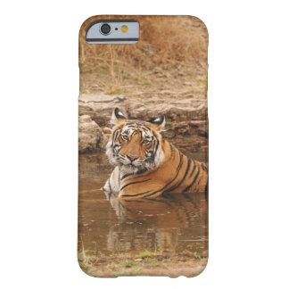 Tigre de Bengala real en la charca de la selva, 2 Funda Para iPhone 6 Barely There