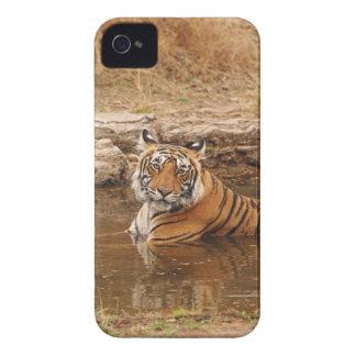 Tigre de Bengala real en la charca de la selva, 2 iPhone 4 Case-Mate Cobertura