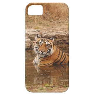 Tigre de Bengala real en la charca de la selva, 2 iPhone 5 Fundas