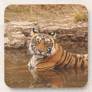 Tigre de Bengala real en la charca de la selva, 2 Posavasos
