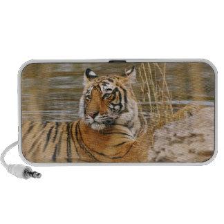 Tigre de Bengala real en la charca del bosque, Altavoz De Viaje
