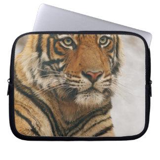 Tigre de Bengala real en la roca, Ranthambhor Funda Computadora