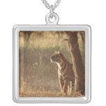 Tigre de Bengala real en mirada hacia fuera para Collar Plateado