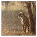 Tigre de Bengala real en mirada hacia fuera para l Azulejo Cuadrado Grande
