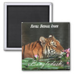 Tigre de Bengala real Imán De Frigorifico