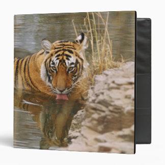 Tigre de Bengala real que bebe en el bosque