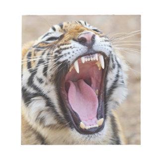 Tigre de Bengala real que bosteza, nacional de Ran Bloc