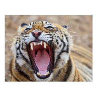 Tigre de Bengala real que bosteza Ranthambhor Tarjetas Postales