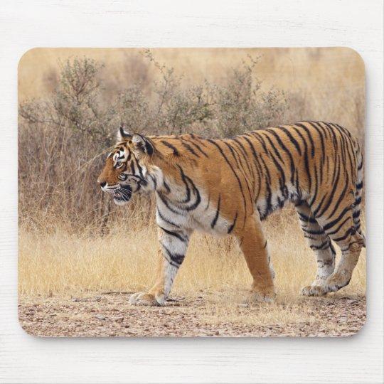 Tigre de Bengala real que camina alrededor de seco Alfombrillas De Raton
