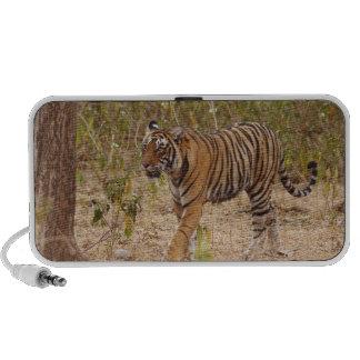 Tigre de Bengala real que mueve alrededor el arbus Altavoces