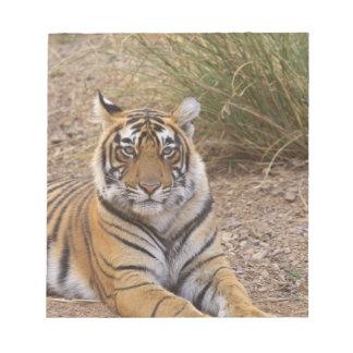 Tigre de Bengala real que se sienta fuera de prado Bloc De Papel