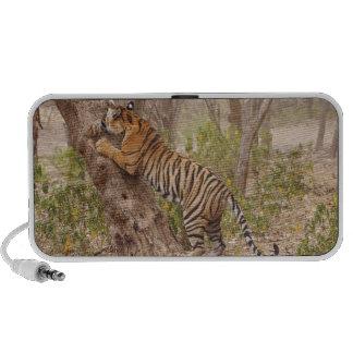 Tigre de Bengala real que sube para arriba el árbo Altavoz De Viajar
