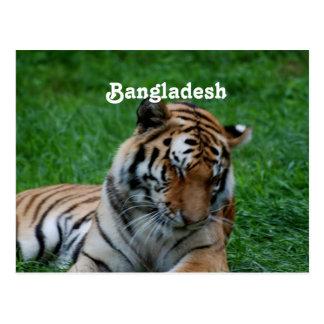Tigre de Bengala real Postales