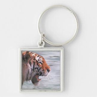 Tigre de bostezo en agua llavero cuadrado plateado