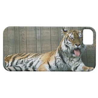 Tigre de bostezo en jaula en el parque zoológico iPhone 5 carcasa
