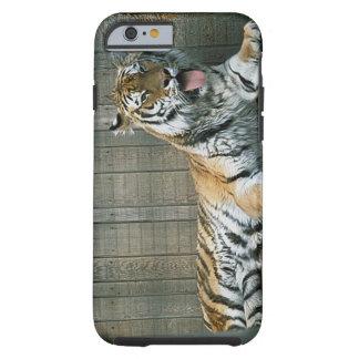 Tigre de bostezo en jaula en el parque zoológico funda de iPhone 6 tough