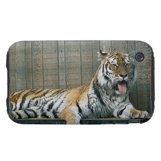 Tigre de bostezo en jaula en el parque zoológico tough iPhone 3 protectores
