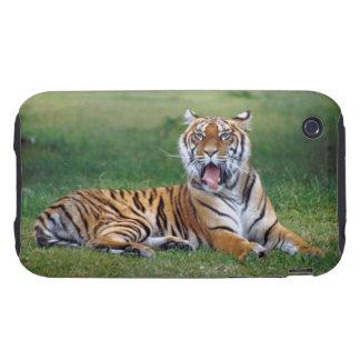 Tigre de bostezo tough iPhone 3 fundas