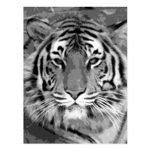 Tigre de BW Postal