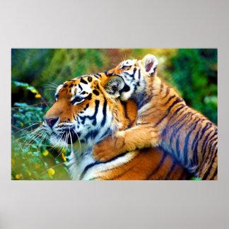 Tigre de la madre con el bebé el subir de Cub y oí Posters