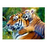 Tigre de la madre con el bebé el subir de Cub y oí Postales