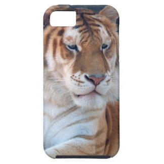 Tigre de oro del Tabby en el parque zoológico 1 de Funda Para iPhone 5 Tough